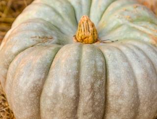 ムリな食事制限は逆効果!「かぼちゃタイプ」のやせる生活法
