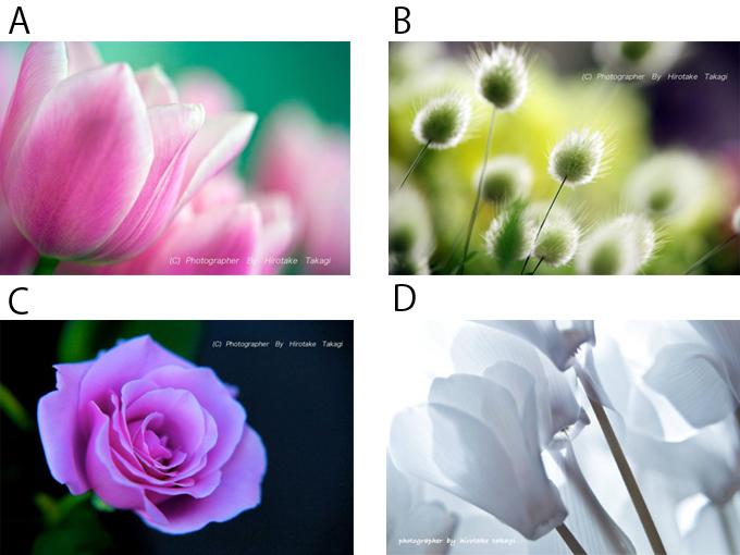 Aチューリップ,Bペールグリーンの野の花,C一輪の薔薇,D白いシクラメン
