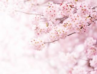 花冷えの季節。体調をくずさないために腸から温める秘訣3か条