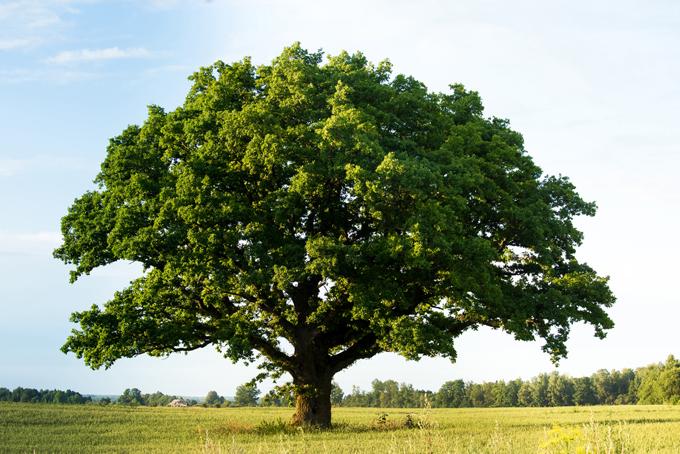 大きな木が1本立っている