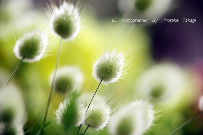 ペールグリーンの野の花