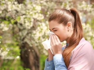 花粉症の状況をスマホでチェック