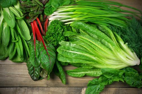 みずみずしい葉もの野菜