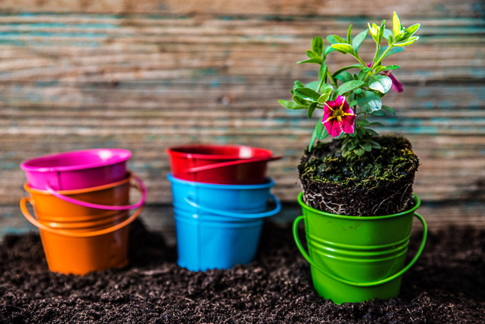 小さいバケツに花の苗