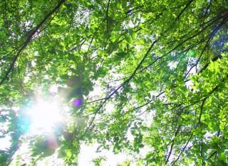 新緑とまぶしい太陽