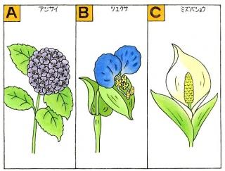 【心理テスト】6月の花で思い出すのは、次のうちどれ?