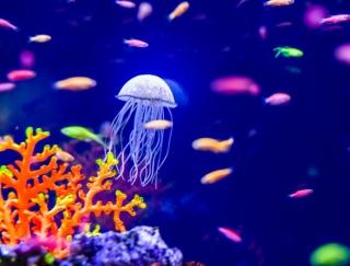 「癒され感が異常」 水中をプカプカ泳ぐくらげに癒されるアプリ「くらげ天国」