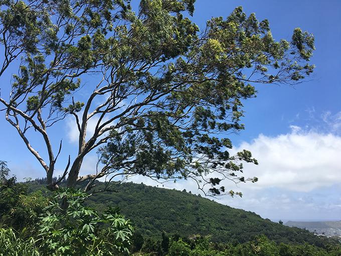 山の上青空の景色