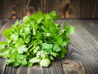 パクチー納豆でコレステロール値が下がる!? 中性脂肪の改善に効果的な香り野菜のレシピ