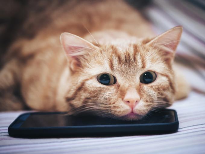 ネコがスマホの上にあごを乗せている画像