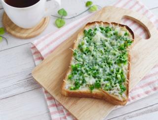 のっけて焼いてできあがり!色みも栄養もバランスよしの「しらすとねぎのチーズトースト」#明日の朝ごはん
