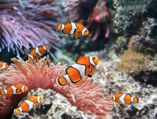 「スマホをさわる時間が一気に少なくなった!」脱スマホ依存できるアプリ「スマホをやめれば魚が育つ」