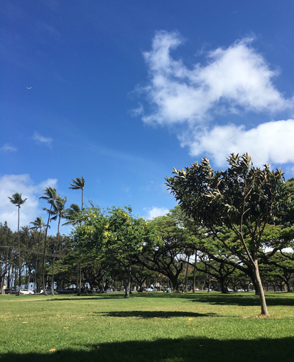 青空、芝生、木々が広がっている