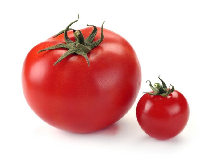 大小のトマトが並ぶ