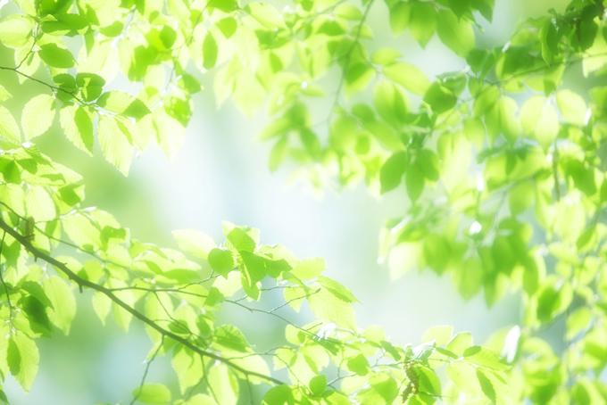 緑の木の葉