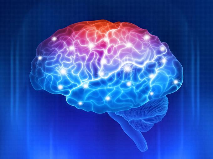 活性化する脳の画像