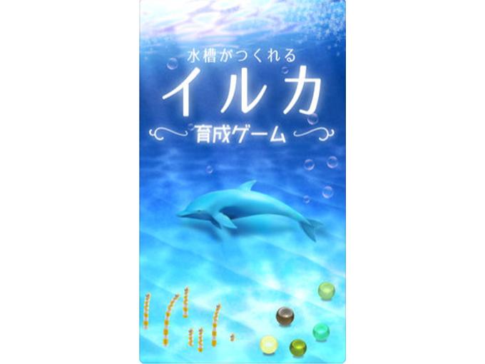 イルカが水中を漂っている画像