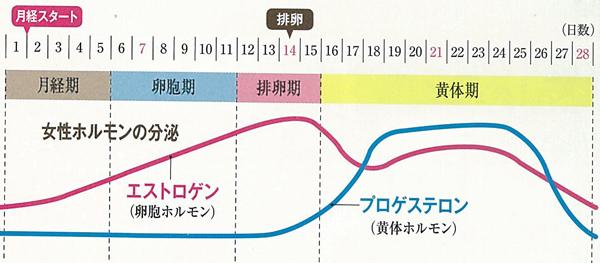 月経の女性ホルモングラフ