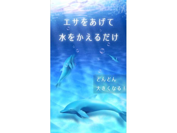 イルカが水中を泳いでいる画像