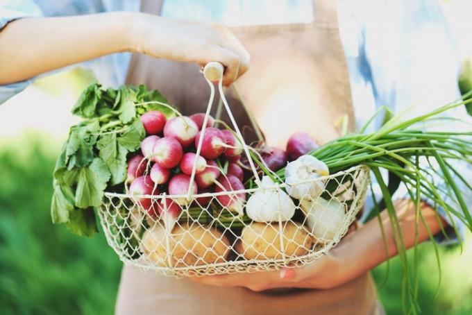 かごに入った野菜を持つ女性の手元