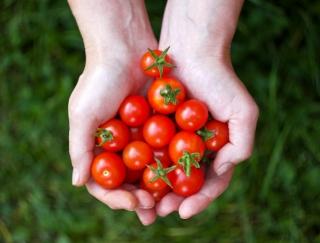 玄米&プチトマトが改善の近道!? コレステロールの原因&改善法を徹底解説!