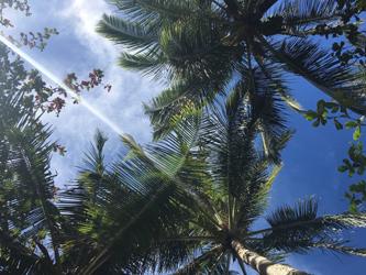 ハワイのヤシの木と空
