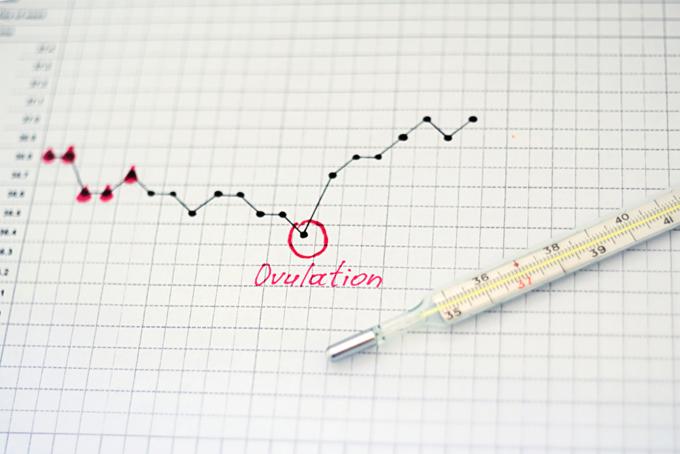 月経周期のグラフ