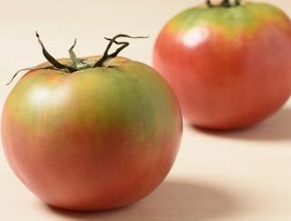 未熟なトマトは、ある果物と一緒に保存するとおいしくなる!?