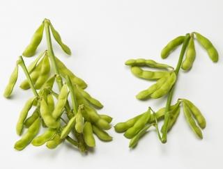 [枝豆]おいしい茹で方や含まれる栄養素、冷凍保存のコツ