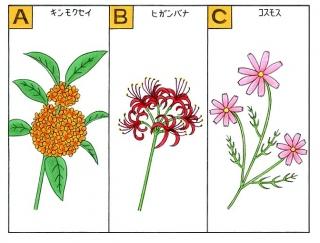 【心理テスト】ふと見渡すと、花が咲いていました。その花は何?