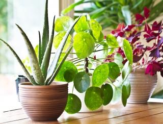 SNSで人気の植物由来シャンプーに注目! ボタニカルを取り入れたライフスタイルに注目