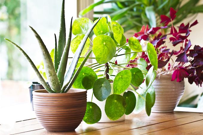 鉢に植えられた植物の画像