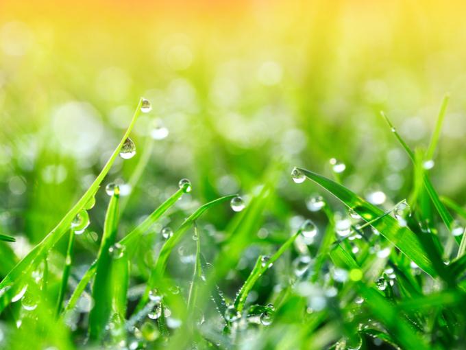 葉っぱに雨の雫がついている画像