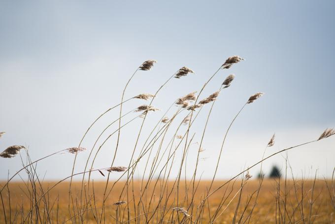 風で揺れている植物の画像