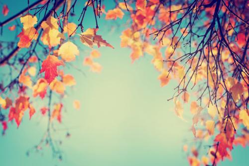 秋の紅葉をイメージした画像