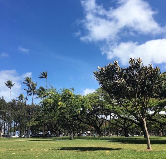 >ハワイの緑豊かな広場