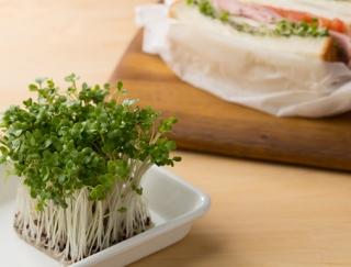 ブロッコリースプラウトのおいしい食べ方と、注目の栄養素とは?