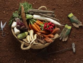 8〜10月生まれの10月はダイエット運がUP! 根菜野菜を多めに摂取 (8月7日〜10月19日生まれ)百合・漢方女神占い