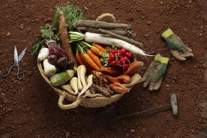 とれたての根菜野菜