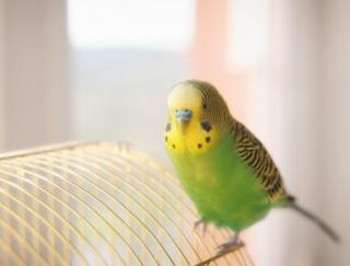 科学者が開発に関わった本格派! 鳥の鳴き声を20種類収録した目覚ましアプリ