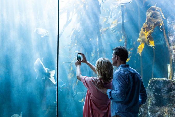 水族館でデートをしている男女の画像