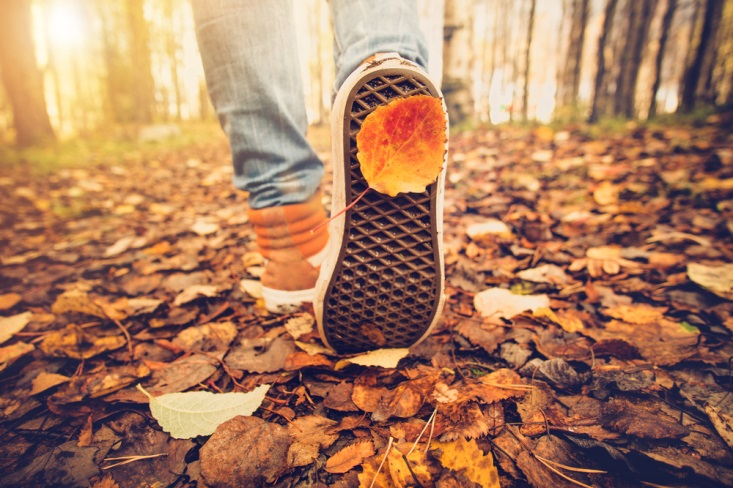 秋の道を散歩するあしもと
