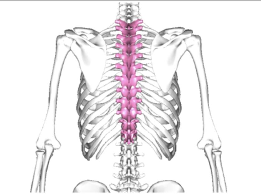 胸椎位置の画像