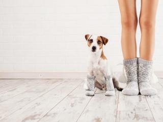 靴下を履いた女性と犬