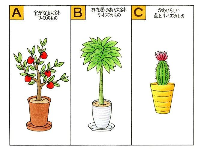 実がなる観葉植物、背の高い緑の観葉植物、サボテンのイラスト
