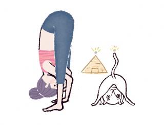 背骨と肩のラインを意識!背中に効かせる「ピラミッドのポーズ」 #今日のねこヨガ