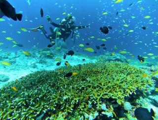 海も魚も全部キレイ!セブ島「all blue」で初ファンダイビング #Omezaトーク