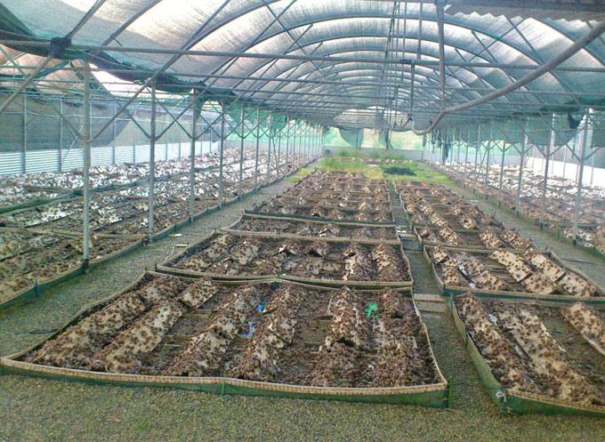 かたつむりの養殖場
