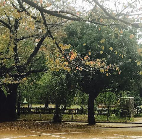 寒い外の公園