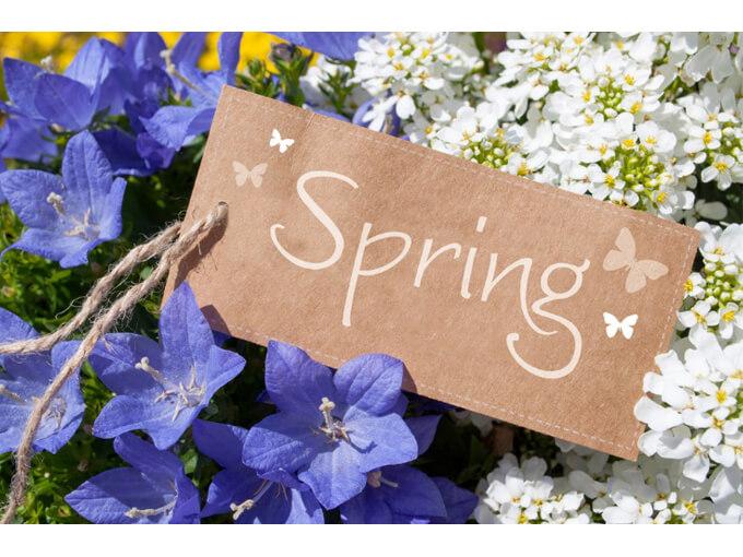 春を知らせる看板とお花
